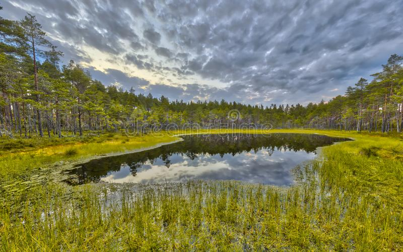 Forest fen in peat moor at Hokensas Nature reserve. Vastergotland, Sweden royalty free stock photo