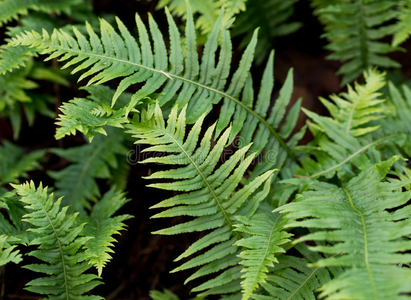 Download Forest fern stock photo. Image of green, outdoors, growing - 28454634