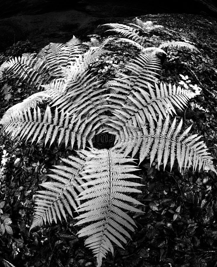 Download Forest Fern Stock Photos - Image: 5889883