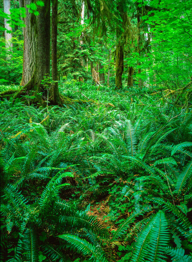 Forest with fern stock image