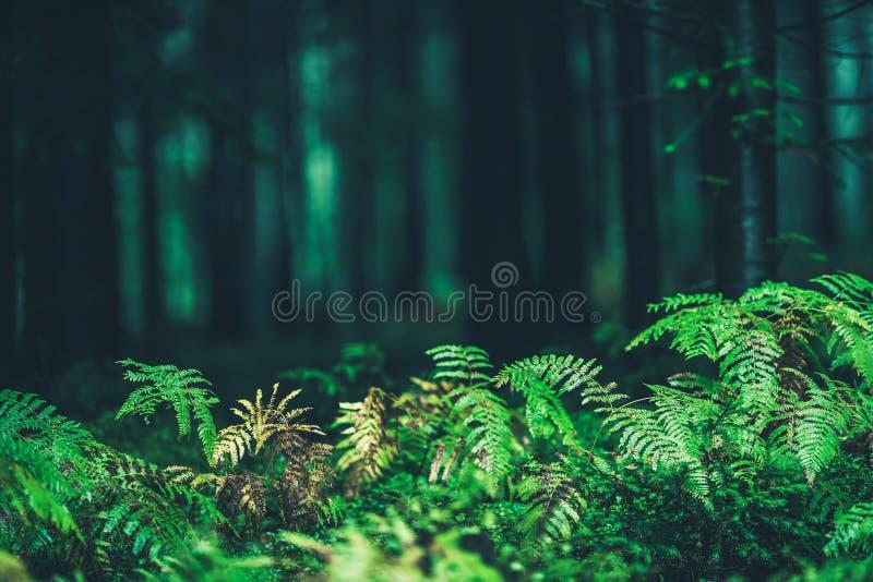 Forest Ferns Closeup royaltyfri foto