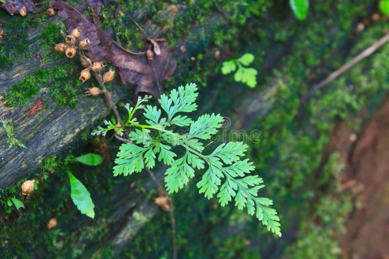 Forest Ferns en Gevallen Logboek stock afbeelding