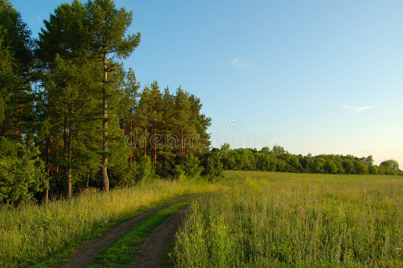 Forest and field royalty free stock images