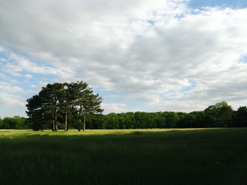 Forest Field Landscape royaltyfria foton