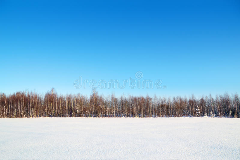 Forest and field with white snow and blue sky. At sunny winter day stock image