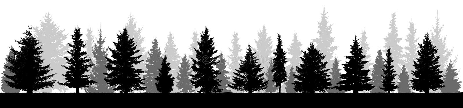 Forest fir trees silhouette. Coniferous spruce. royalty free illustration