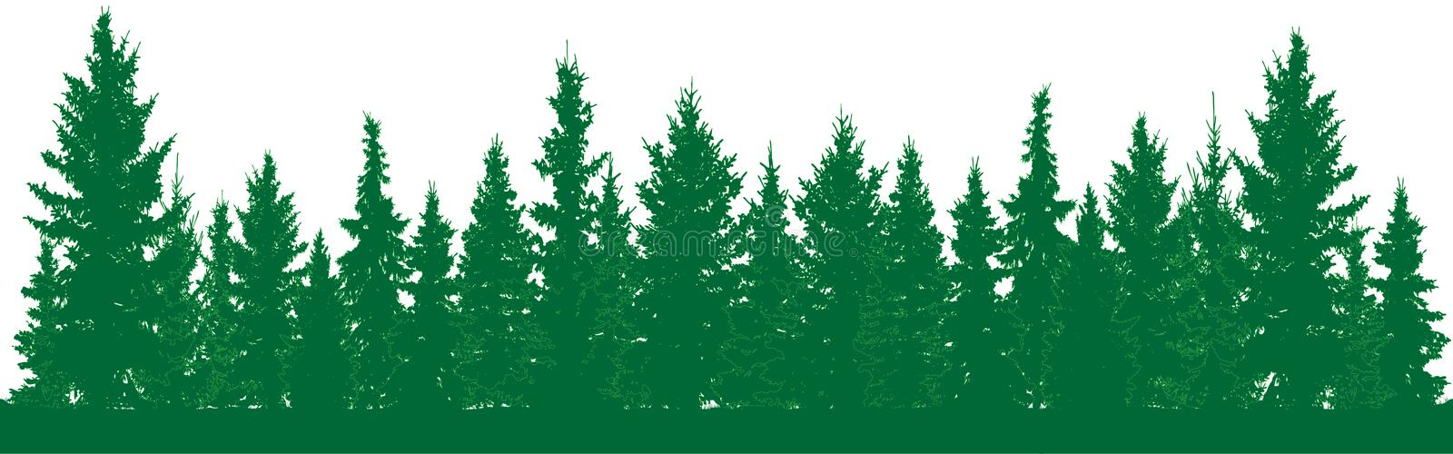 Forest of fir trees silhouette. Park alley of evergreen wood. Coniferous spruce. vector illustration