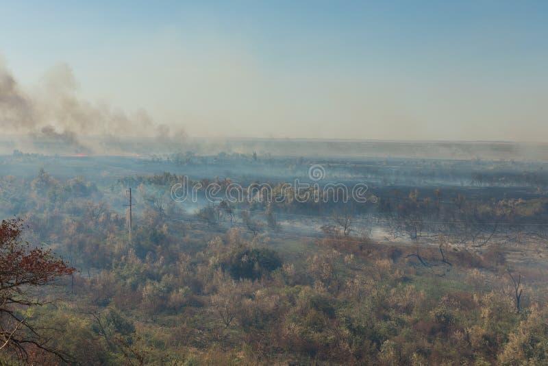 Forest Fire Árvores queimadas após o incêndio violento, poluição foto de stock royalty free