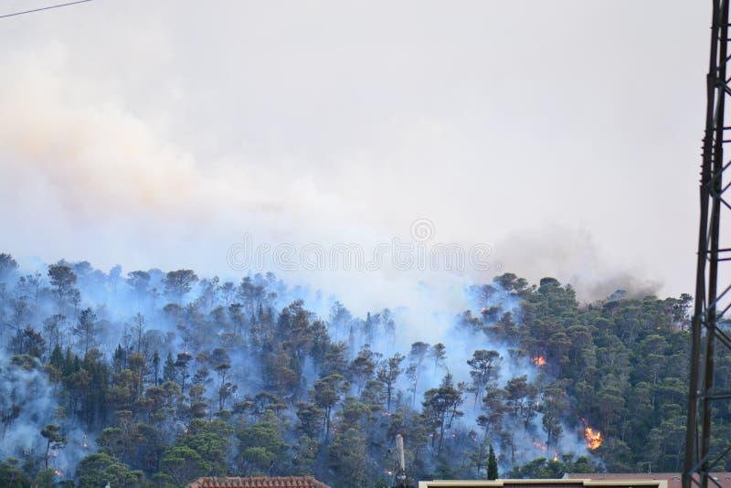 Forest Fire Árvores queimadas após o incêndio violento, a poluição e o muito fumo fotografia de stock royalty free