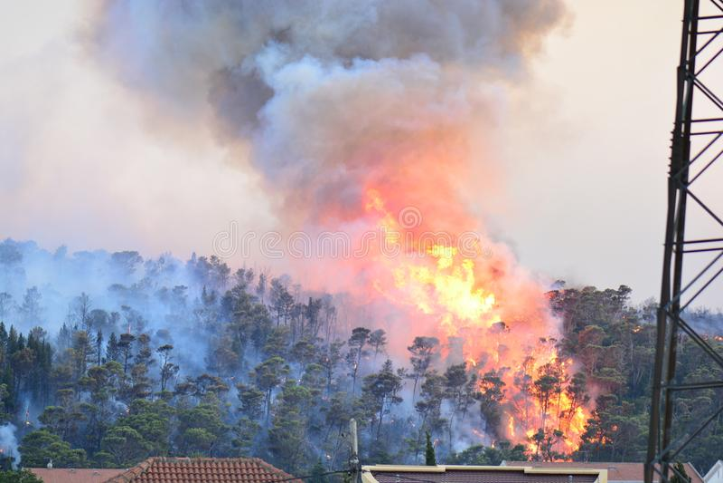 Forest Fire Árvores queimadas após o incêndio violento, a poluição e o muito fumo imagem de stock