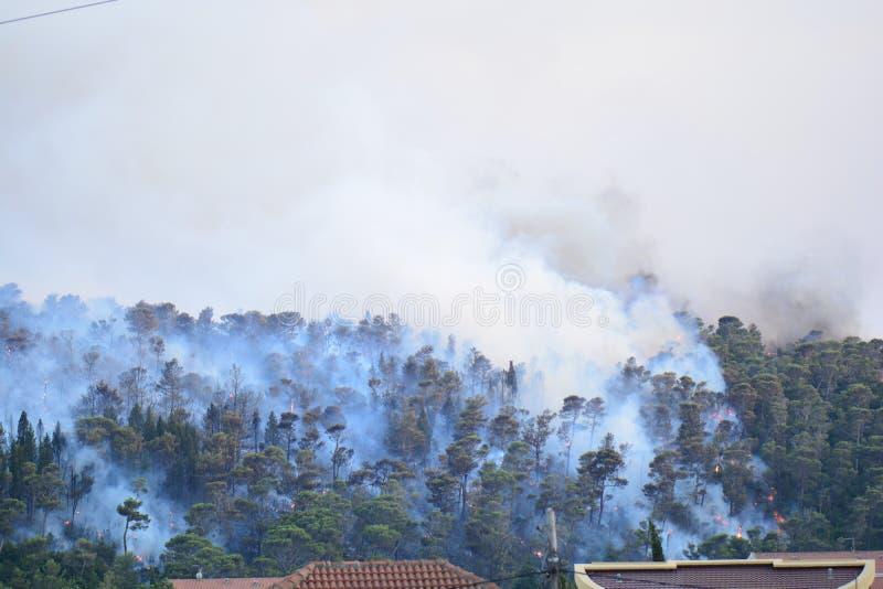 Forest Fire Árvores queimadas após o incêndio violento, a poluição e o muito fumo foto de stock
