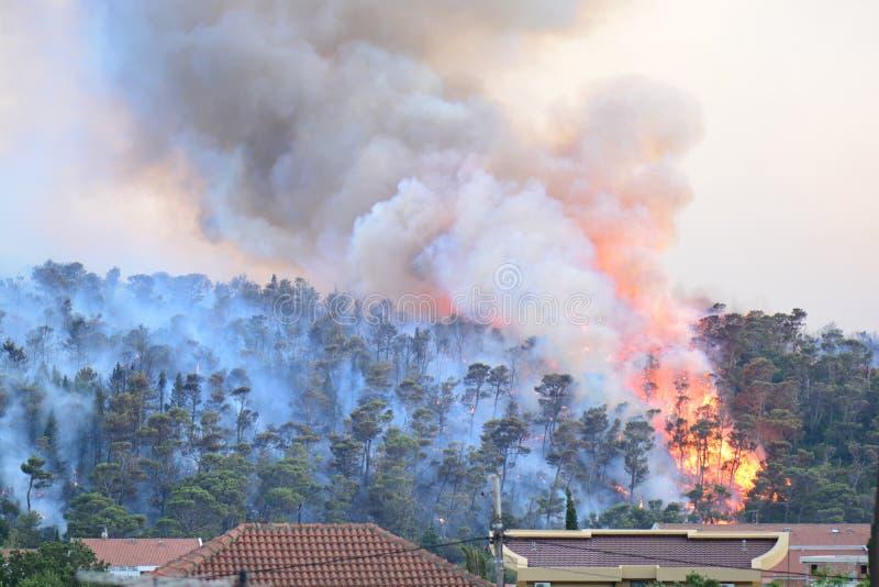 Forest Fire Árvores queimadas após o incêndio violento, a poluição e o muito fumo fotos de stock