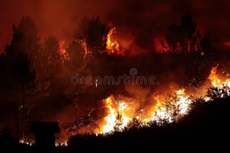Download Forest Fire stock photo. Image of hilly, dangerous, hill - 11062348