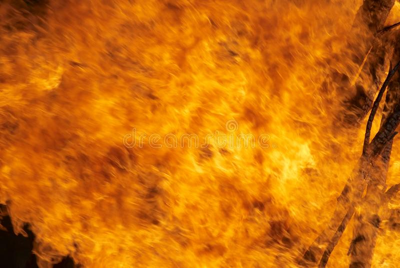 Forest fire. Disaster with big fire in the forest stock images