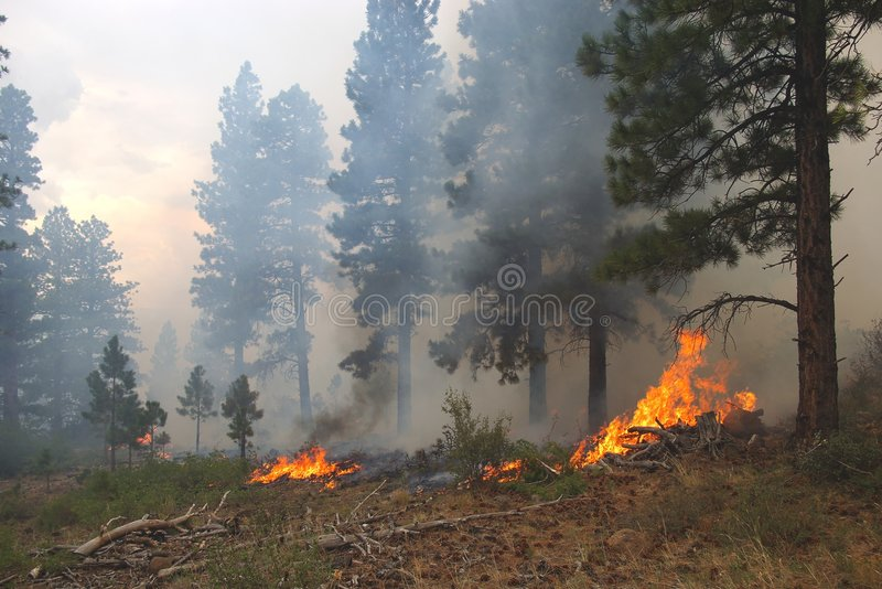 Download Forest Fire stock image. Image of flames, trees, summer - 3152775