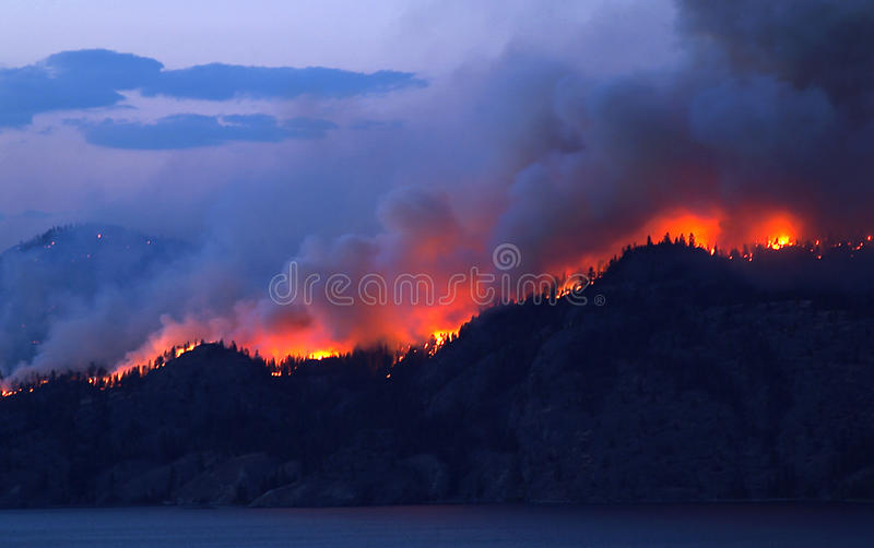 Forest Fire stockfoto