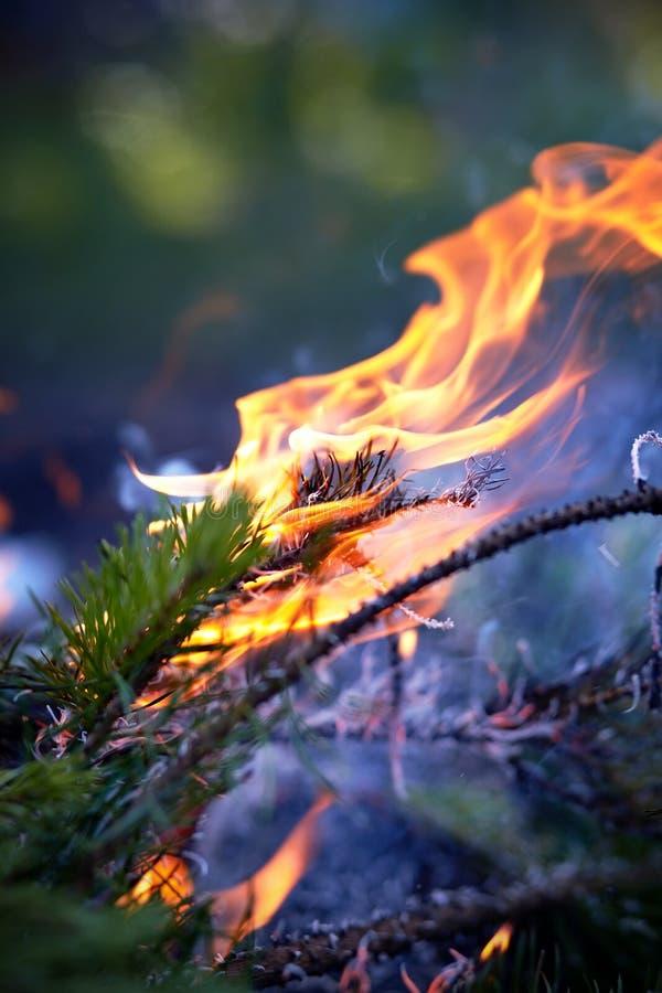 Download Forest Fire stock foto. Afbeelding bestaande uit nave - 39114114