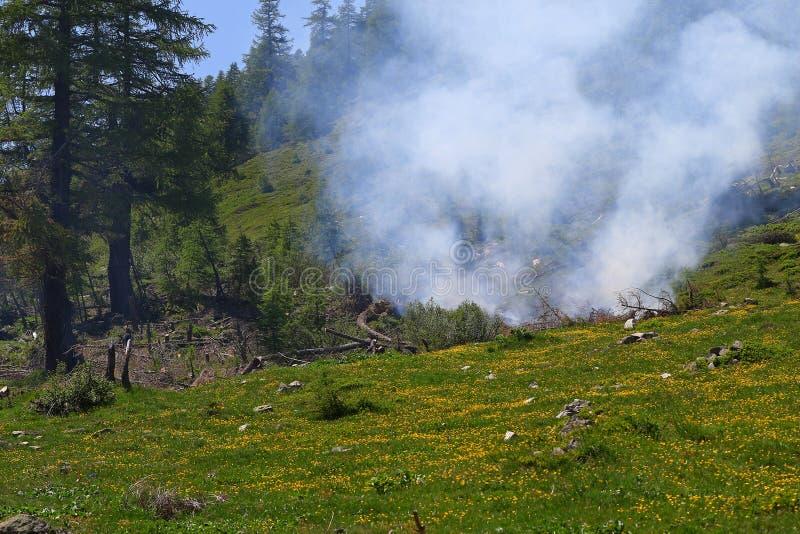 Download Forest Fire immagine stock. Immagine di foresta, verde - 55356219