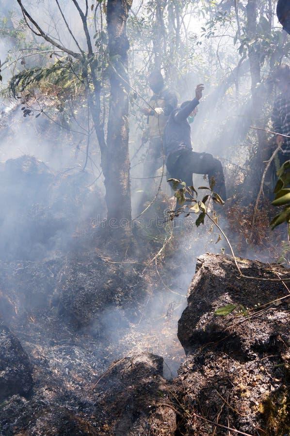 Forest Fire fotografie stock