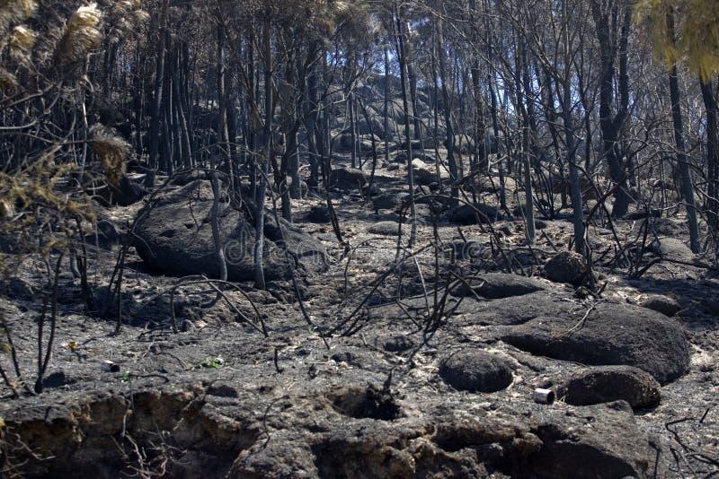 Forest Fire lizenzfreie stockfotografie