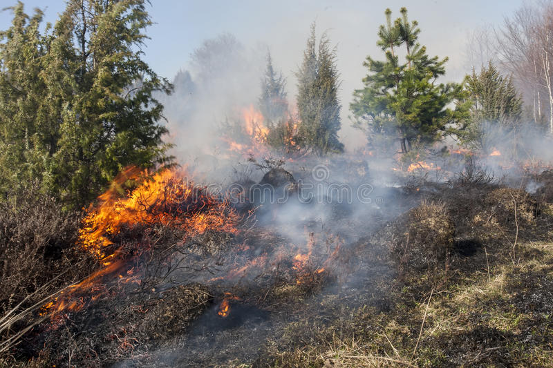 Forest Fire photos stock