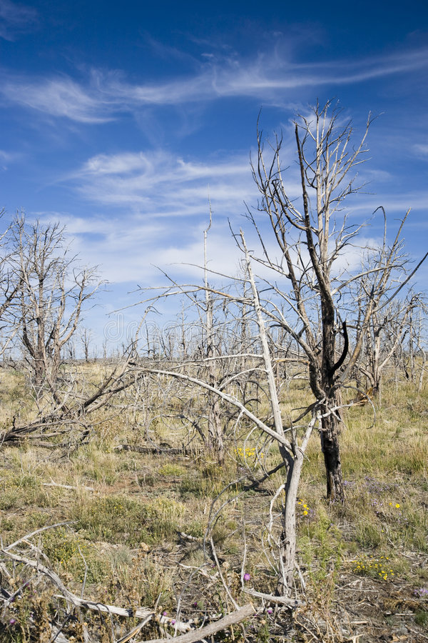 Download Forest fire stock image. Image of charred, trunk, cinder - 7953439