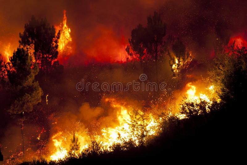 Forest Fire stockbilder