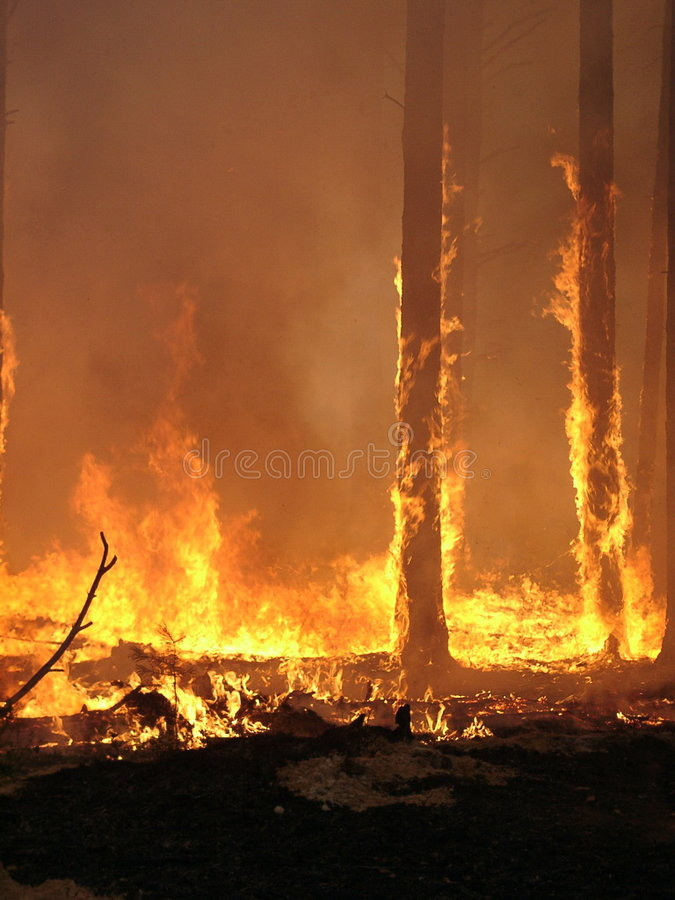 Free Forest Fire Royalty Free Stock Image - 834016