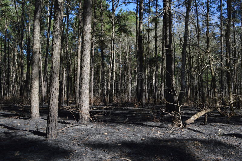 Forest Fire imagens de stock royalty free