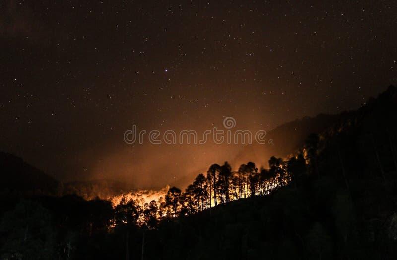 Forest Fire arkivbilder