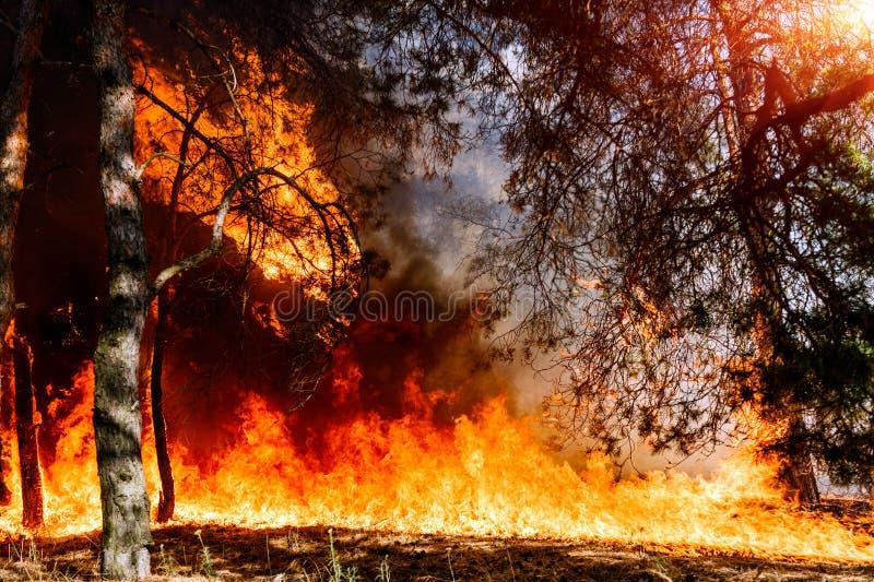 Forest Fire Aangewezen om wildfires of het voorgeschreven branden te visualiseren stock afbeeldingen