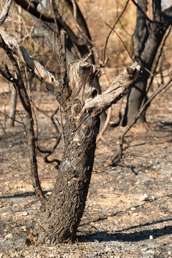 Download Forest fire aftermath stock image. Image of dark, pine - 21171383