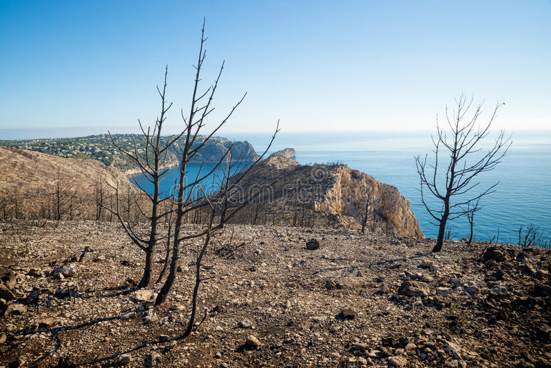 Forest Fire Aftermath imagens de stock royalty free