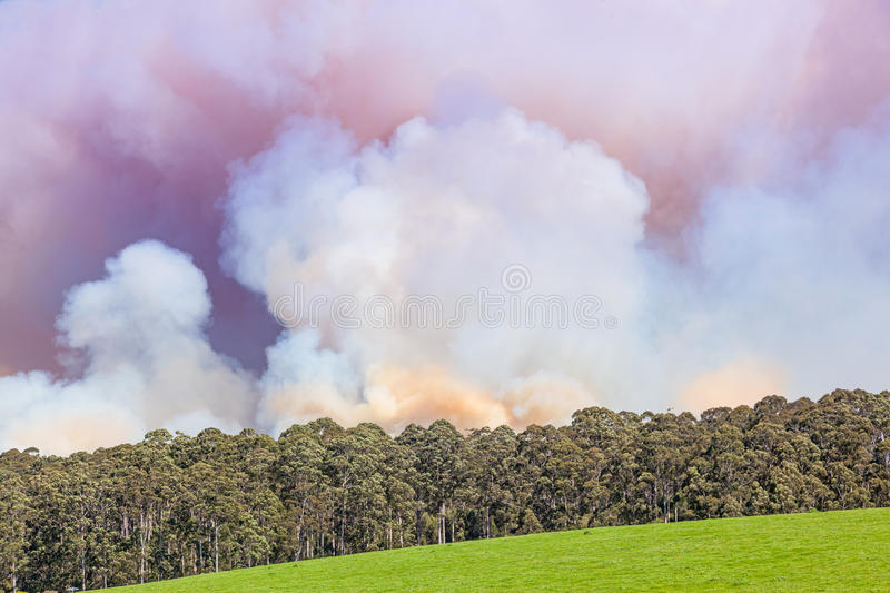 Forest Fire in Australia. A forest fire near the town of Pemberton in Western Australia royalty free stock images