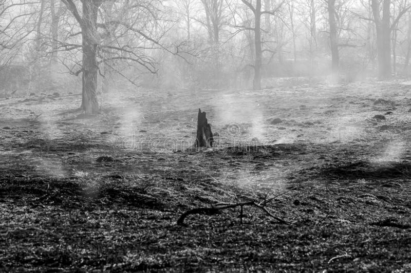 Forest fire. Burned trees after wildfire, pollution and a lot of smoke. Black and white photography stock photo