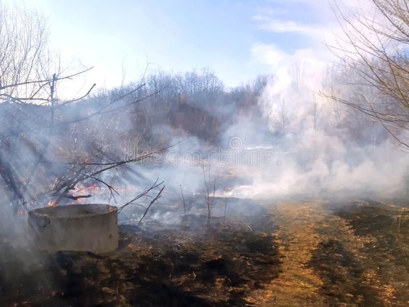 Forest fire burning dry grass and smoky stock photos