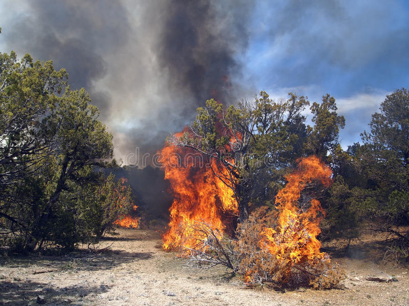 Download Forest Fire stock photo. Image of stumps, combustion - 30807104