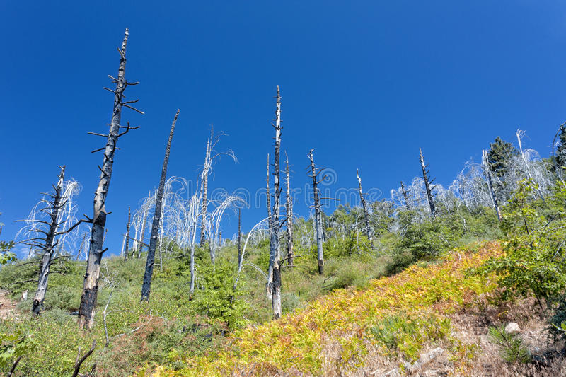 Forest Fire Damage royalty free stock images