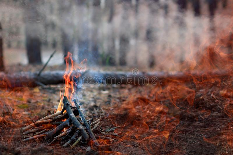 Forest Fire de gevallen boom wordt gebrand aan de grond heel wat rook wanneer vildfire Ruimte voor tekst royalty-vrije stock foto