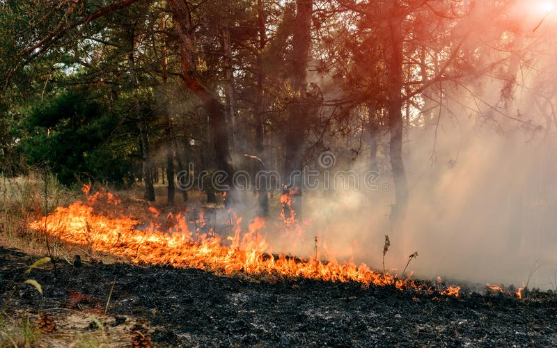 Forest Fire Gebrande bomen na bosbranden en veel rook stock foto