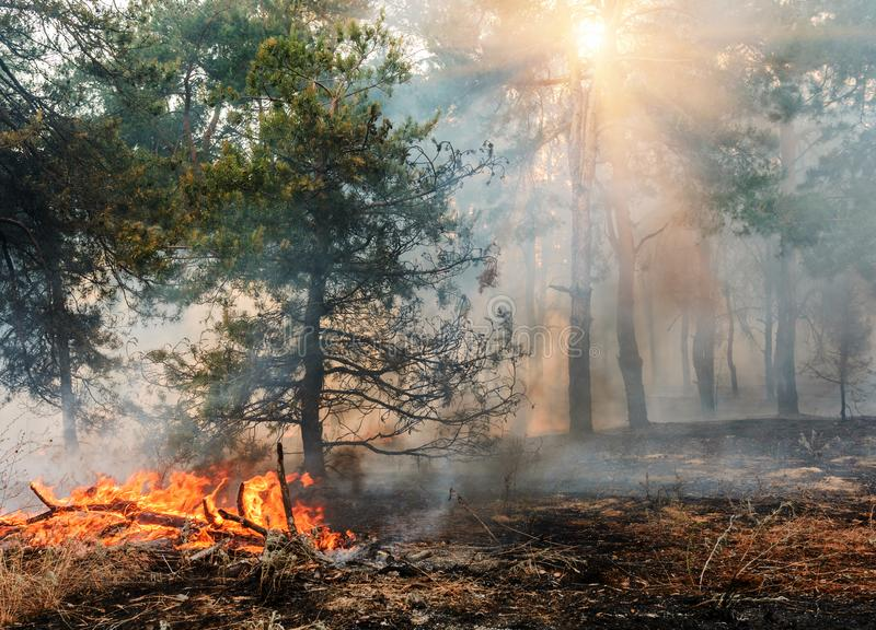 Forest Fire Gebrande bomen na wildfire, verontreiniging en heel wat rook stock fotografie