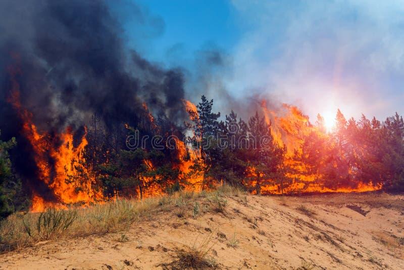 Forest Fire Gebrande bomen na wildfire, verontreiniging en heel wat rook royalty-vrije stock afbeeldingen