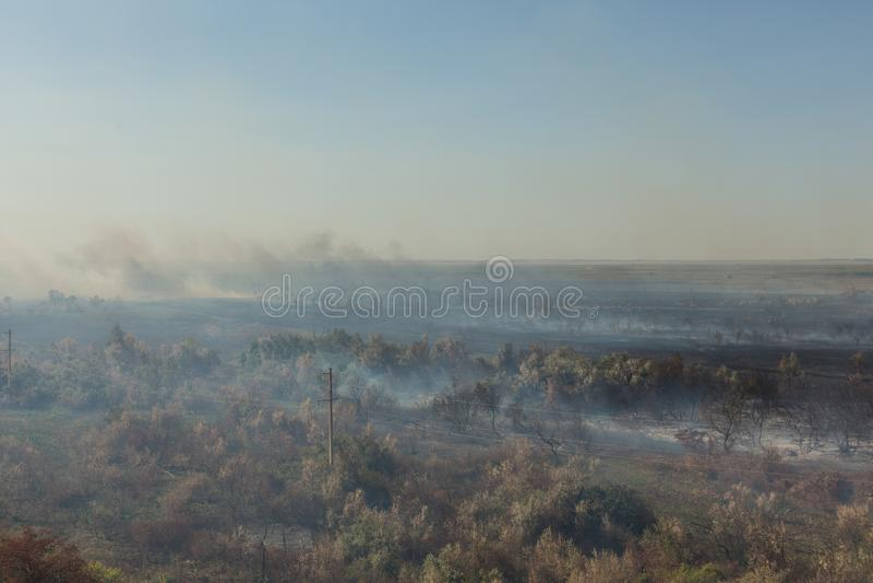 Forest Fire Gebrannte Bäume nach verheerendem Feuer, Verschmutzung lizenzfreie stockfotos