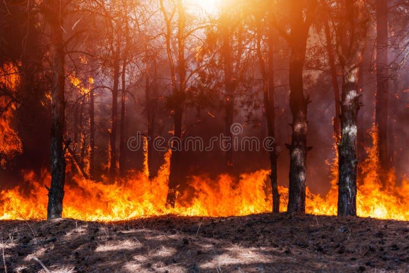 Forest Fire Gebrannte Bäume nach Waldbränden und vielen Rauche lizenzfreies stockfoto