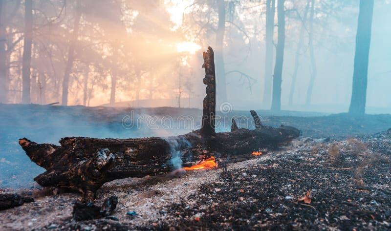 Forest Fire l'albero caduto è bruciato alla terra molto fumo quando vildfire fotografia stock libera da diritti