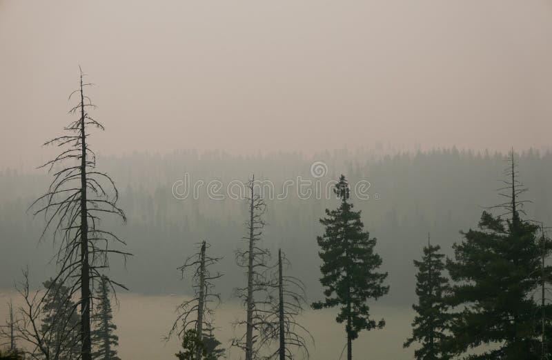 Forest Fire mit grauem Rauche und Bäumen stockfotografie