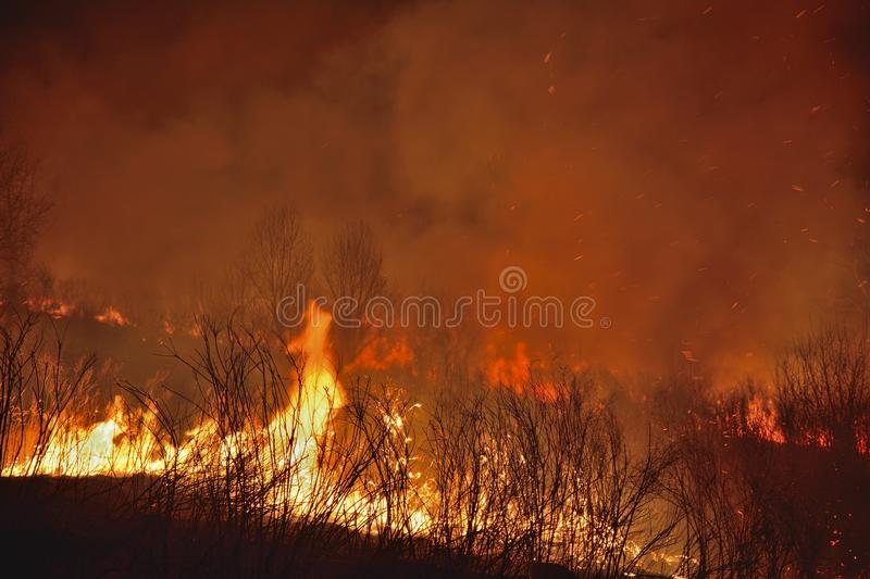 Forest fire 9 stock photo