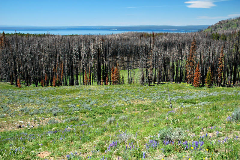 Download Forest Fire Remains stock photo. Image of disaster, natural - 9646560