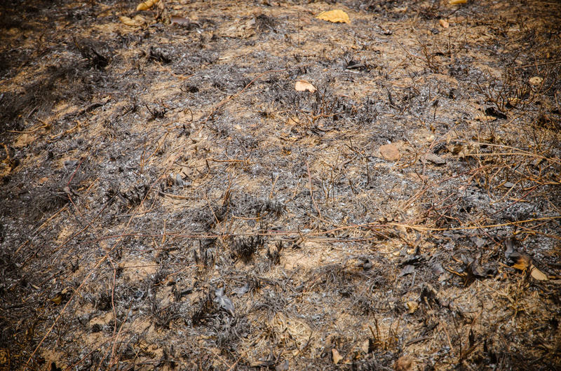 Forest after fire. In Southeath Asia stock photography