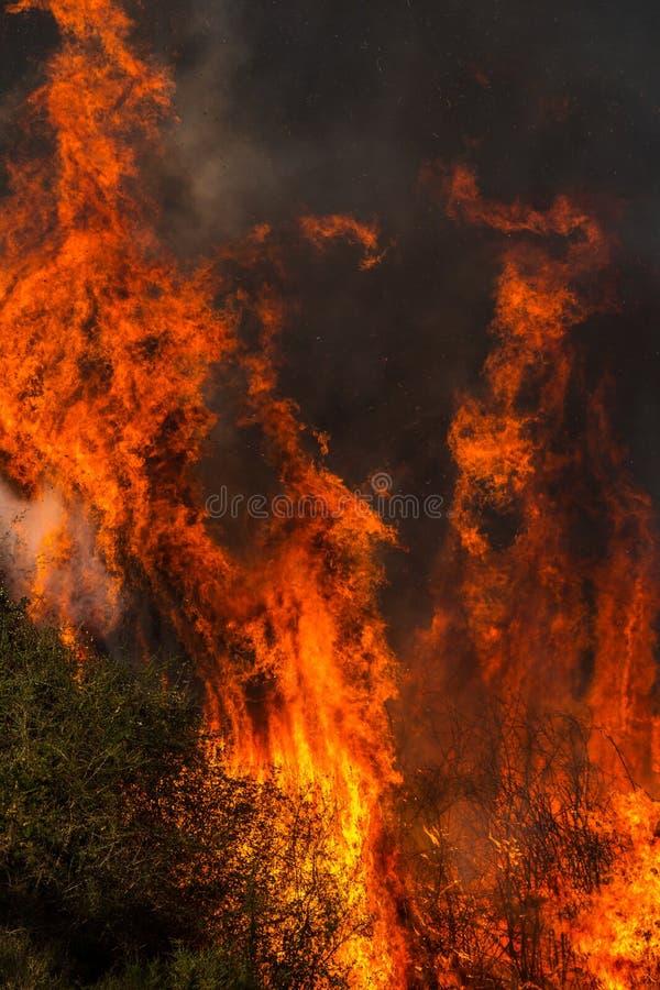 Forest Fire specificerade flammor royaltyfri foto